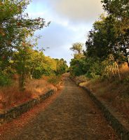Camino Real de los Laureles